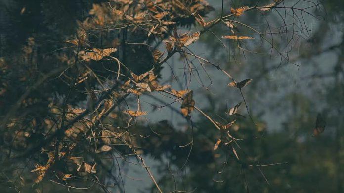 abren-santuarios-de-la-mariposa-monarca