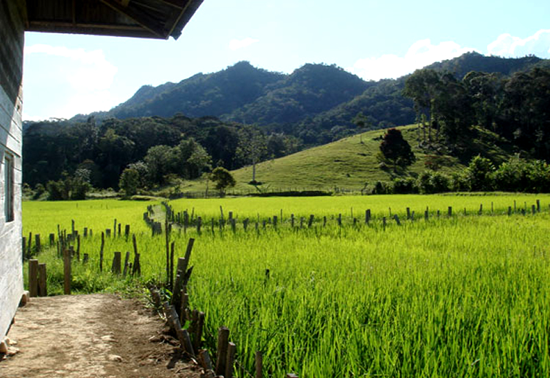 kelabit-highlands-un-paraiso-inexplorado01