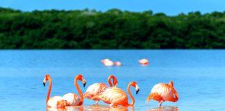 Ofrece Yucatán estímulos fiscales para atraer inversiones turísticas