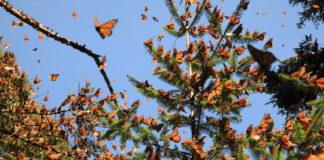 El mejor año para el turismo en Michoacán