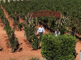 Descubre el lado vinícola de Zacatecas