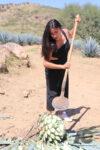 Jima en campos agaveros en Corralejo