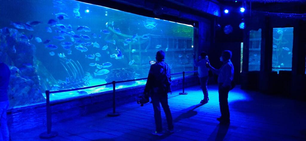 Conoce el maravilloso mundo Marino con más de 50 exhibiciones en 11 salas diferentes en el Acuario del Bajío.